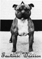 history staffordshire bull terrier126