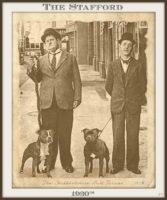 history staffordshire bull terrier13