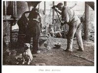 history staffordshire bull terrier20