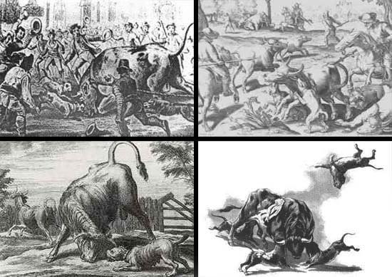 Historie Stafordšírského Bulteriéra