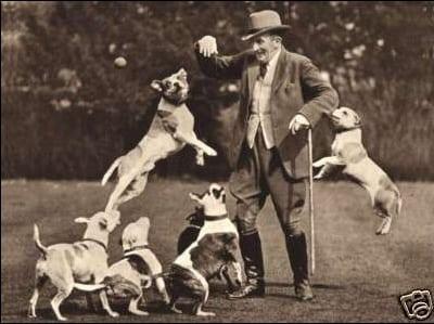 history staffordshire bull terrier