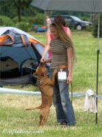 Staffordshire Bull Terrier 2011