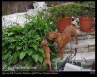 new pups 1
