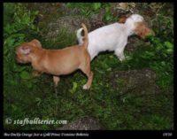 new pups 10