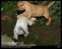 new pups 11