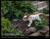 new pups 14