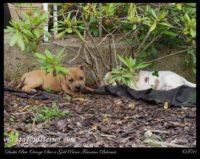 new pups 15