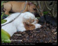 new pups 16