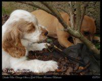 new pups 17