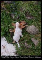 new pups 19