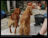 new pups