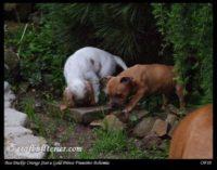 new pups 3