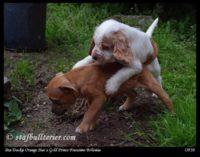 new pups 4