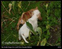 new pups 5