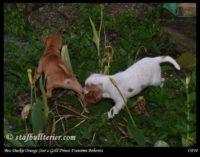 new pups 6