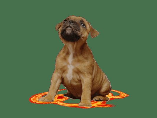 puppy-large