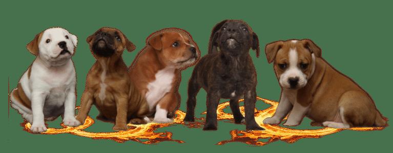 pups-large
